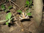 Motýlí údolí Petaloudes